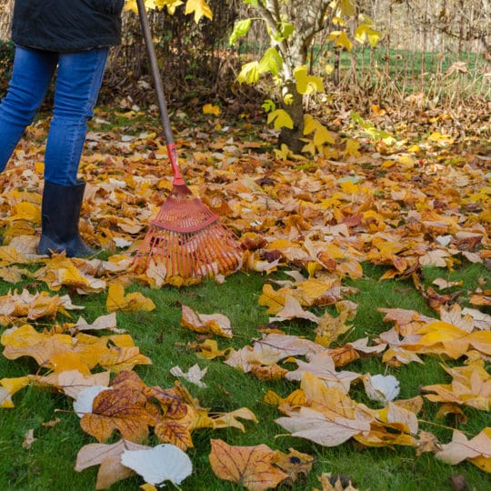 Yard Waste Disposal Tips