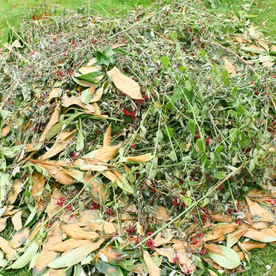 Yard Waste Removal Tips