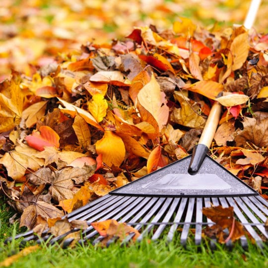 What to Do with Yard Waste this Fall